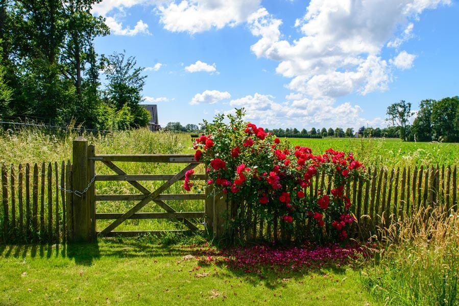 Bloemrijke Tuin Dutch Quality Gardens (2)