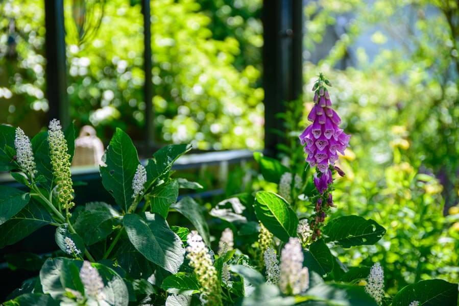 Bloemrijke Tuin Dutch Quality Gardens (4)