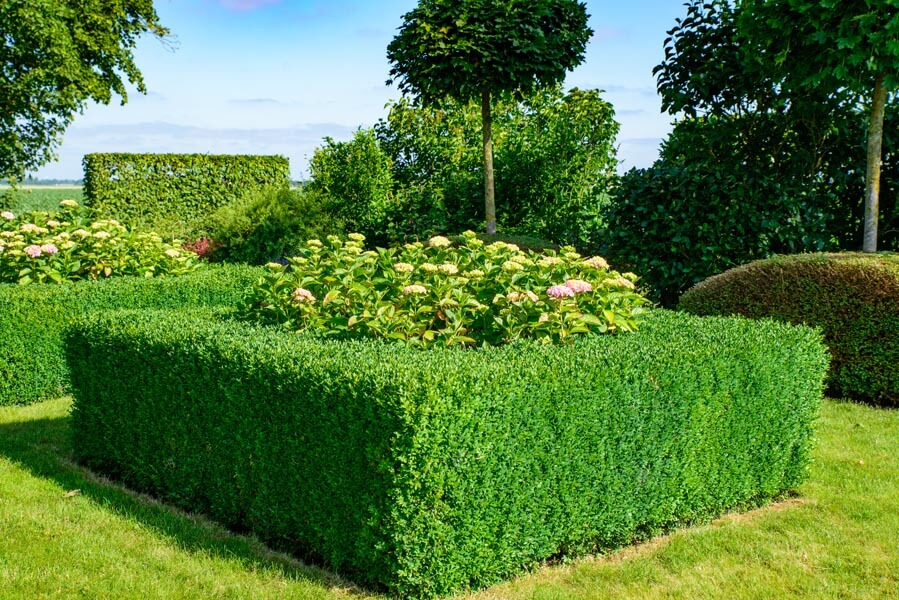 Landelijke Tuin Dinteloord Dutch Quality Gardens (5)