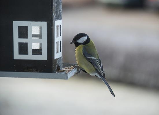 Voertips Vogels In Je Tuin