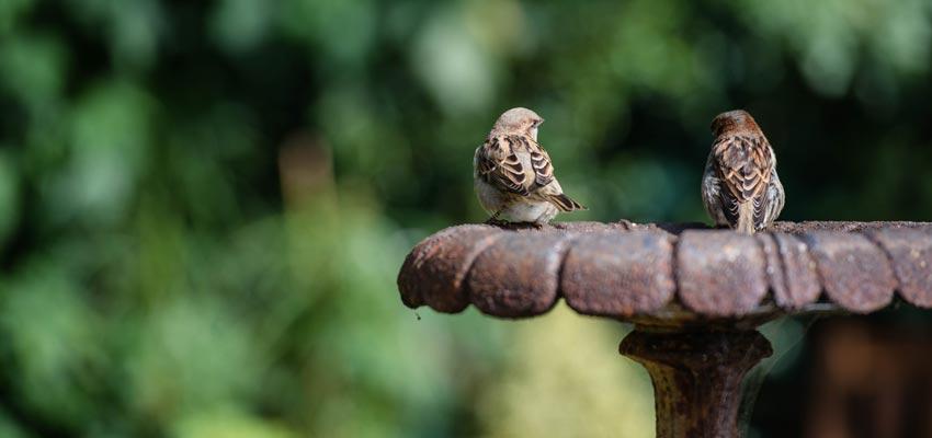 Vogels In Je Tuin Tips