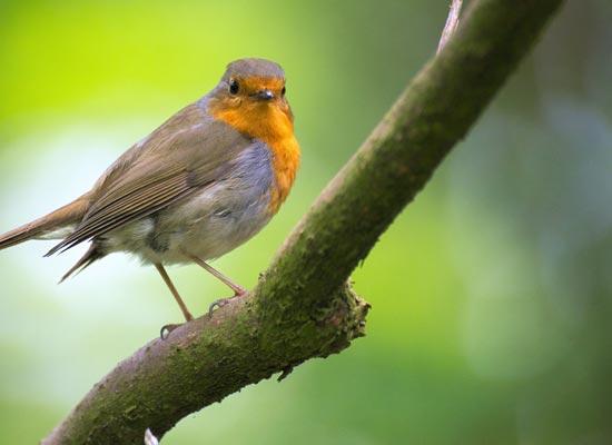 Vogels In Je Tuin Video