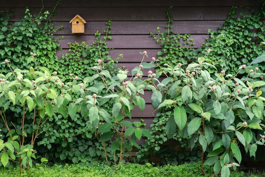 bosrijke tuin met vijver (1)