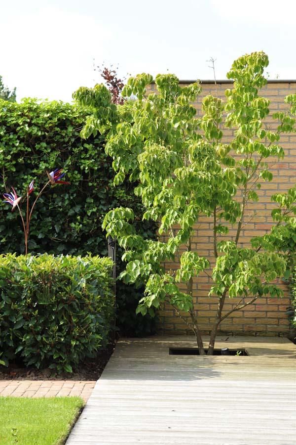 formele tuin met gevarieerde beplanting (12)