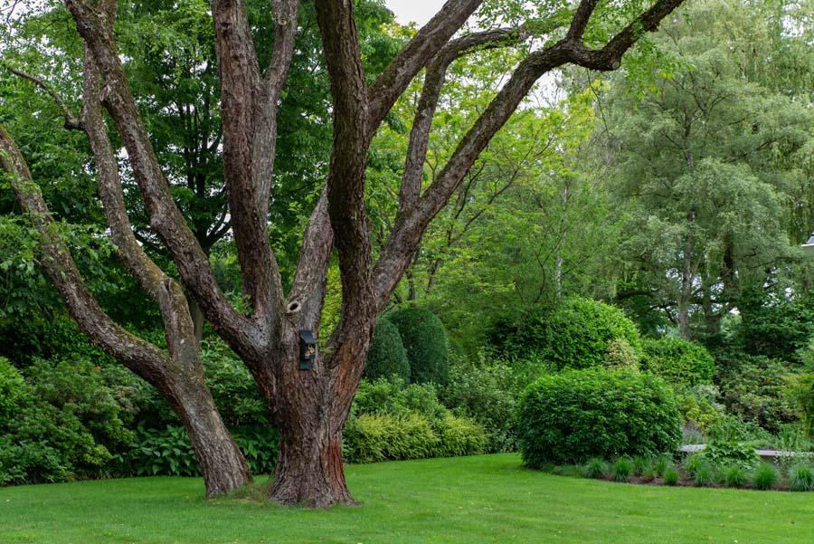 groene tuin in schalkhaar (6)