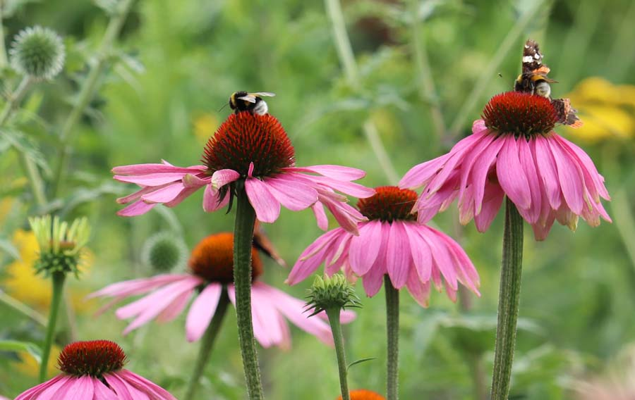 landelijke vrijliggende tuin (10)