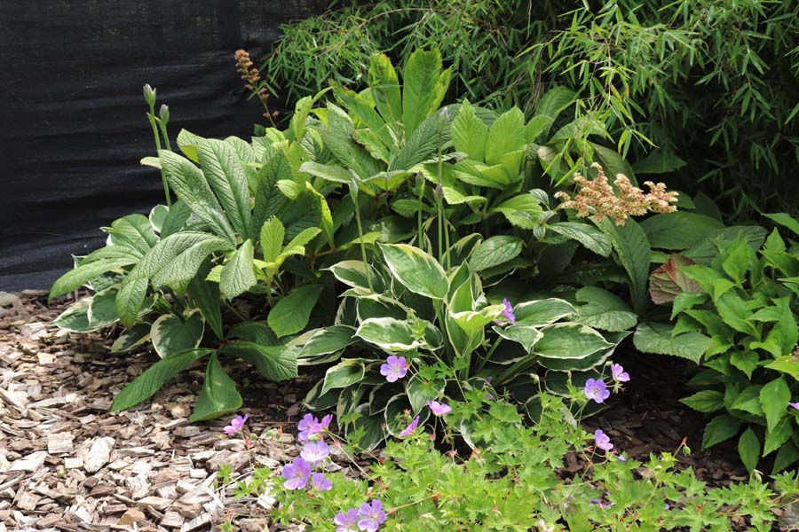 natuurlijke rustige tuin (13)