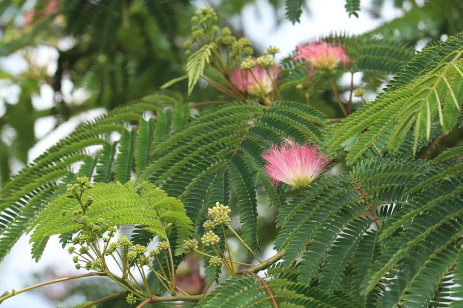 natuurlijke rustige tuin (20)